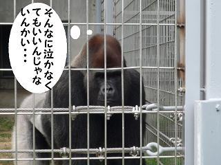maika21080515.jpg