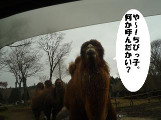 maika21121315.jpg