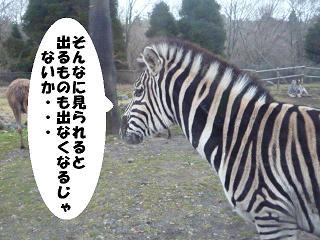 maika211221318.jpg