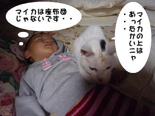 maika2201011.jpg