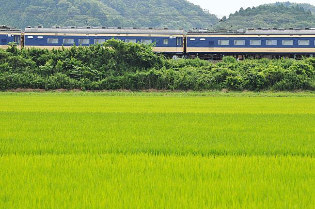 shinainuma11.jpg