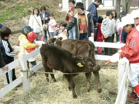 白老牛(上村和牛)の店 直販 ウエムラ牧場