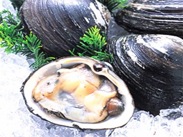 ホッキ貝(北寄貝)のお取り寄せ【稚内産活ホッキ貝-特大3kg/5kg】