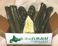 【北海道特産品】北海道の山菜~たけのこ(タケノコ・竹の子)は塩漬