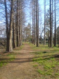秋ヶ瀬公園2