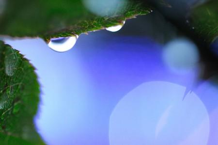 雨上がりの宝石
