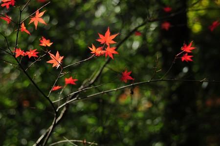 照る山紅葉