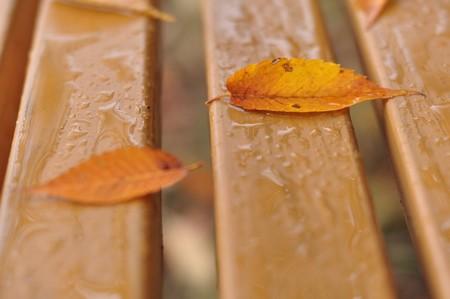 雨上がりのベンチで