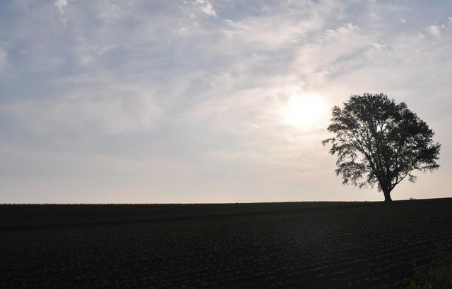 哲学の木(逆光)