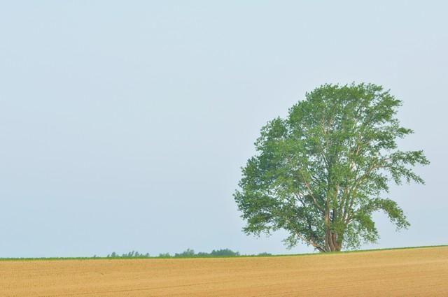 哲学の木(順光)