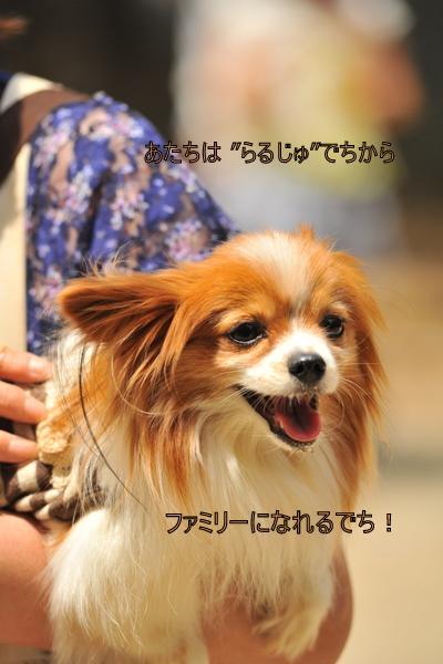 DSC_0446.jpg