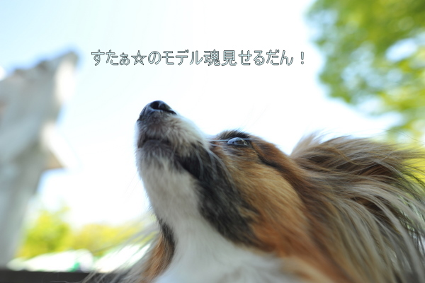 DSC_8885.jpg