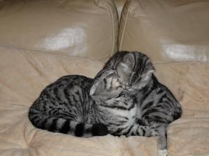 20090125猫
