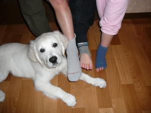 20090201靴下
