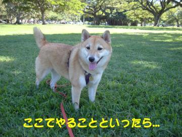 03_convert_20101207093354.jpg