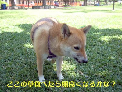 DSC06624_convert_20100323074904.jpg