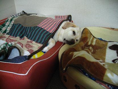 アルト~それはテナーのベッドだよ~