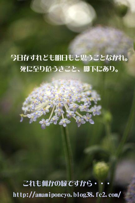 IMG_6791u306Eu30B3u30D4u30FC.jpg