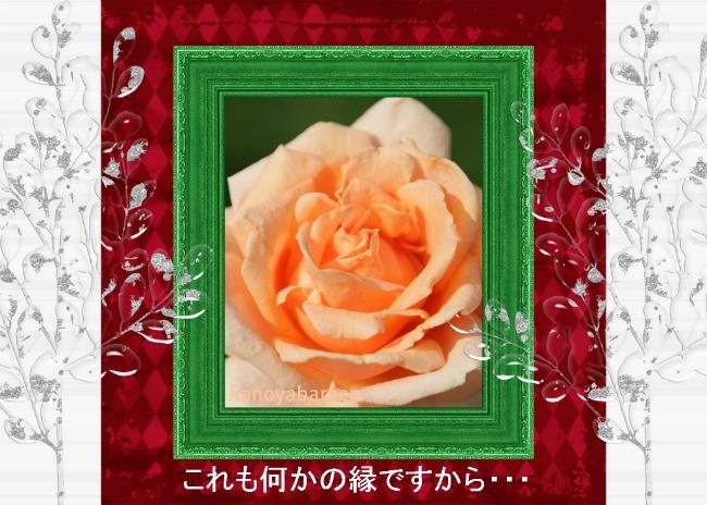 bara_20111115113147.jpg