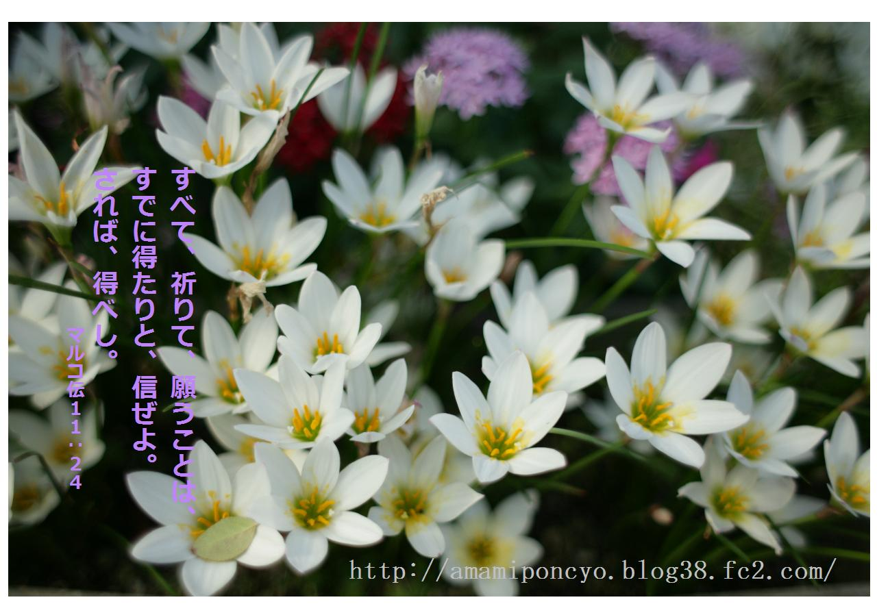 hana_20100114215815.jpg