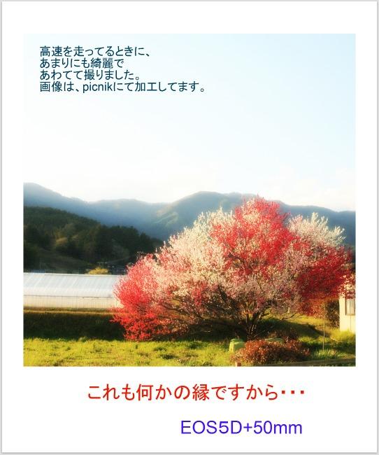hana_20110518150704.jpg