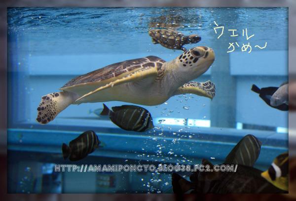 kame_20091124215657.jpg