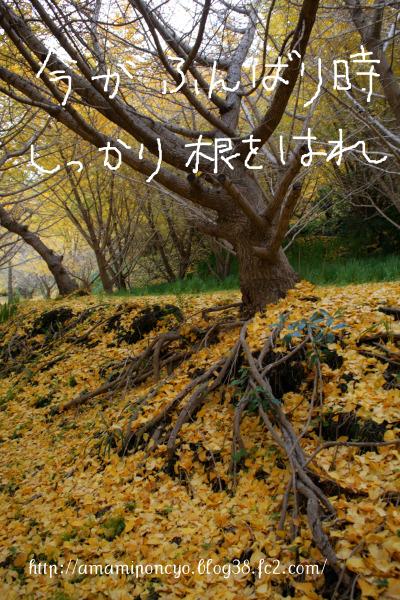 ki_20091210121122.jpg