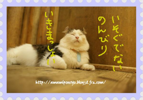 neko_20090923195615.jpg