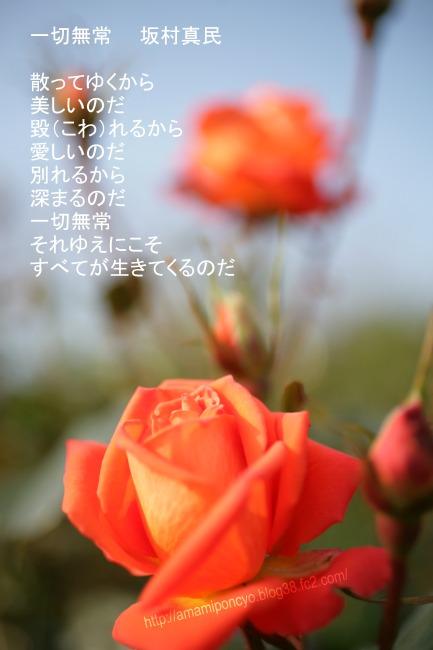 sakamurashinmin.jpg