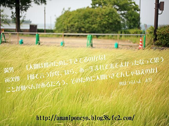 t_torasan.jpg