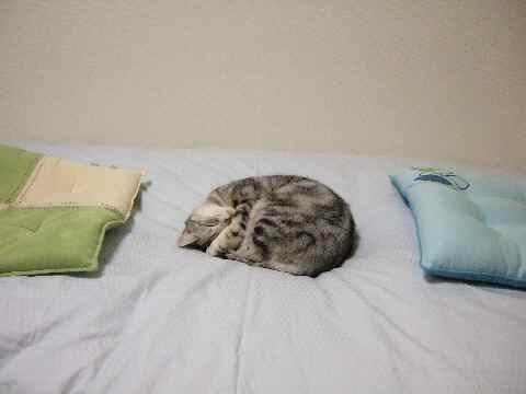 寝てます3