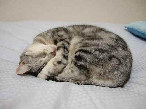 寝てます2