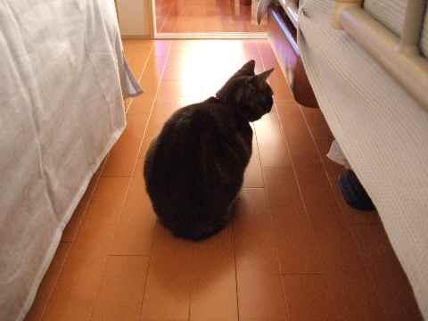 避難する猫1
