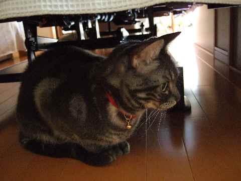 避難する猫3