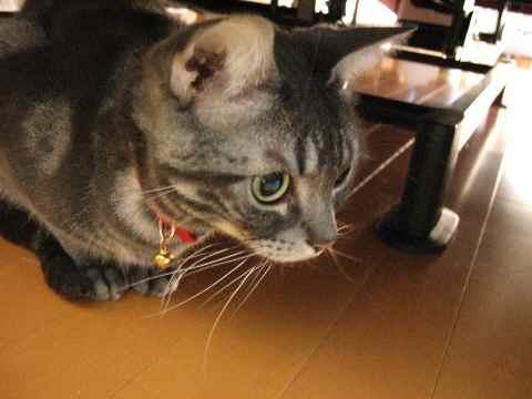 避難する猫4