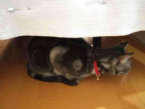 避難する猫2