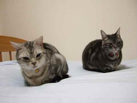 猫ブログやのに……