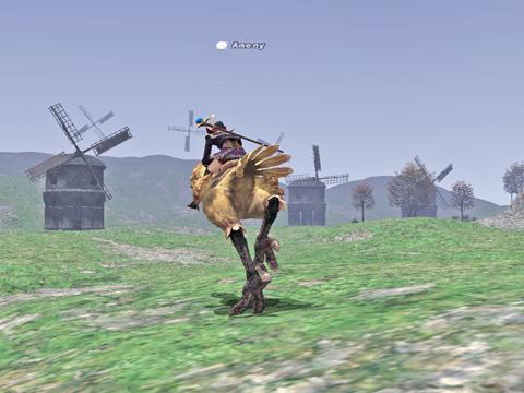 迷子のチョコボ~~~~コンシュは今週も風車でした!