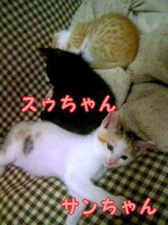 satooya591.jpg
