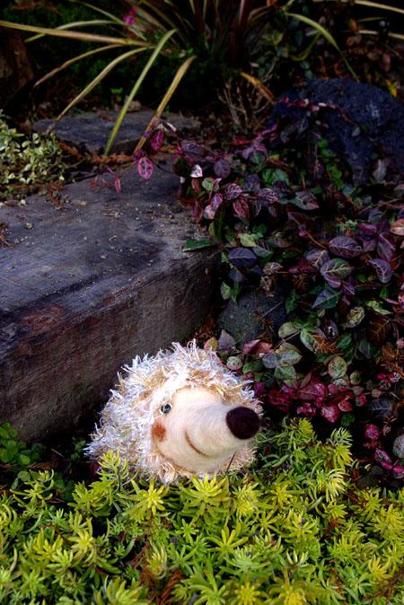 羊毛フェルトハリネズミ