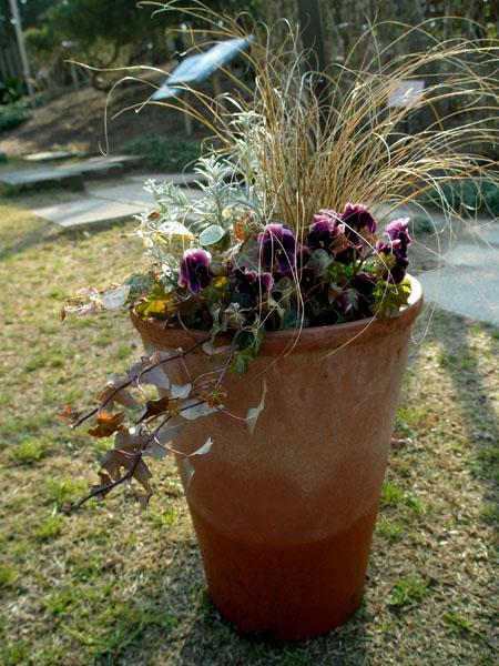 冬の寄せ植え