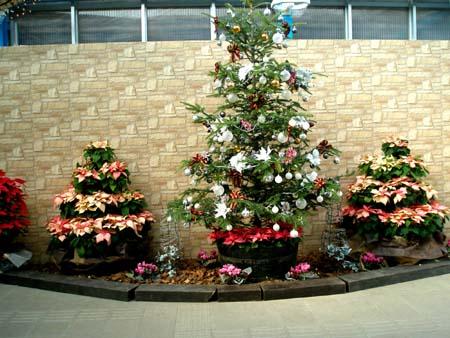 クリスマスツリーたち
