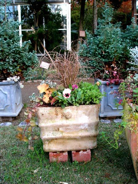 葉牡丹など寄せ植え