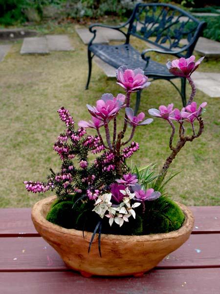 葉牡丹ミニ寄せ植え2