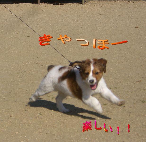 公園run0104