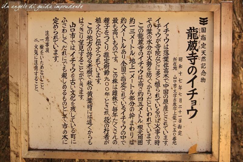IMG_8995[1]
