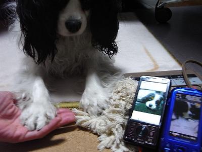 RIMG0010_20100406003314.jpg