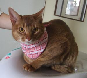 ココロ 猫