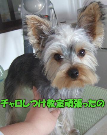 101219藤田チャロ