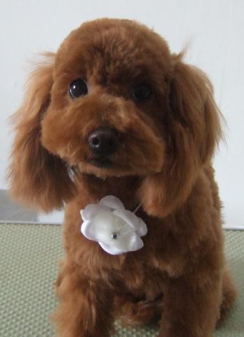 20110203金岡モコ